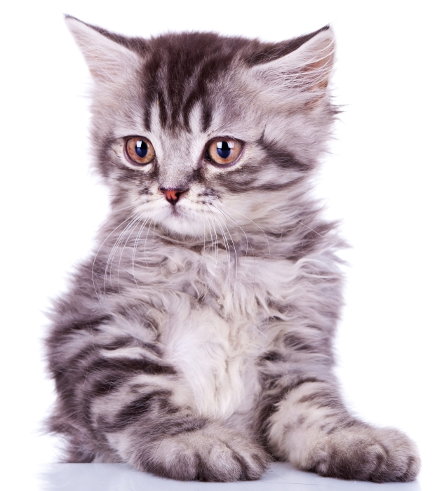 Lyder kissanhiekka